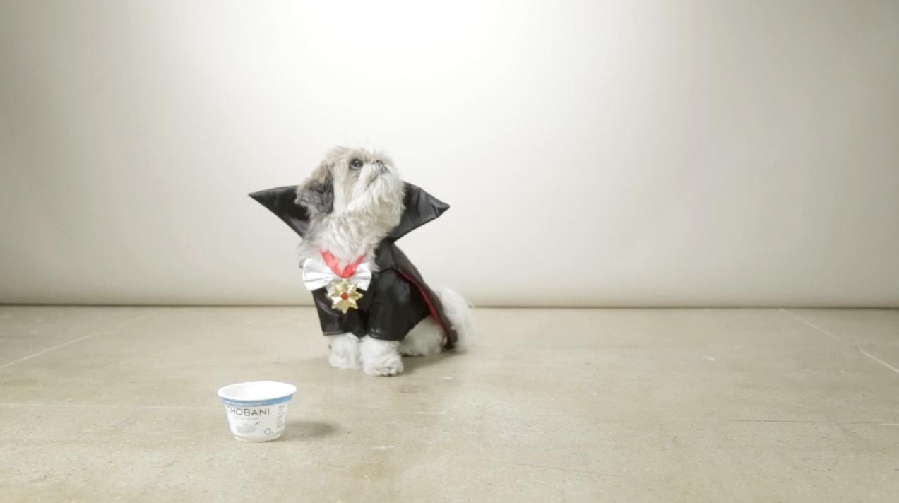 chobani yoğurt