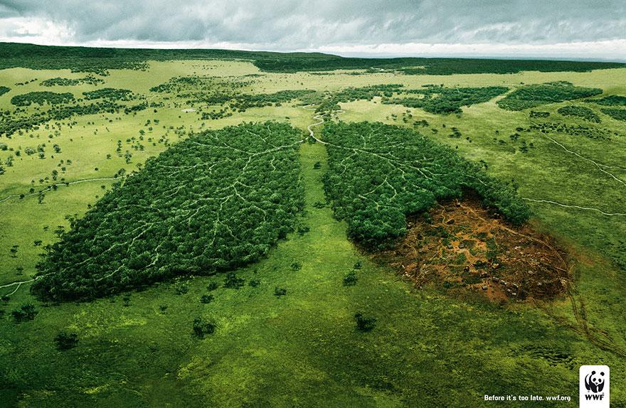doğayı koruma kampanyaları