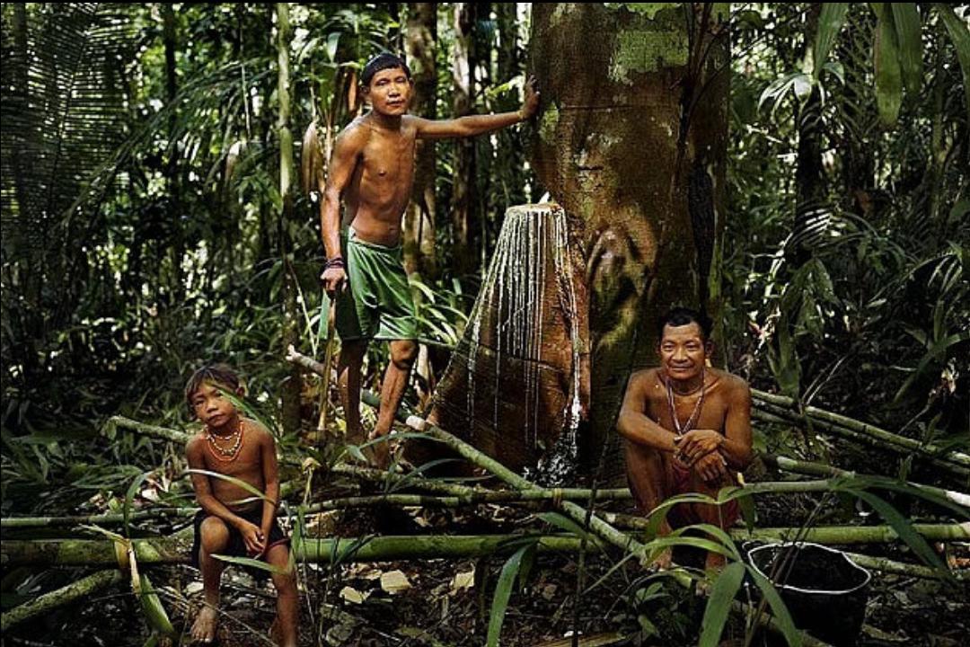 piraha kabilesi