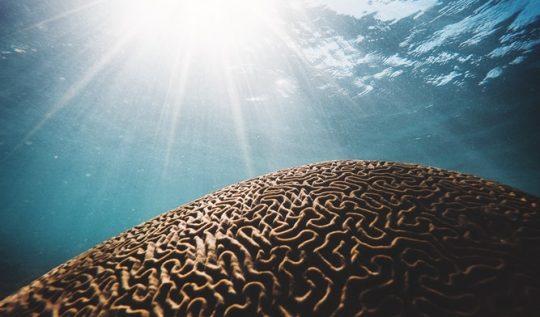 beyin gizemleri