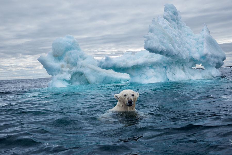 küresel ısınmanın etkileri