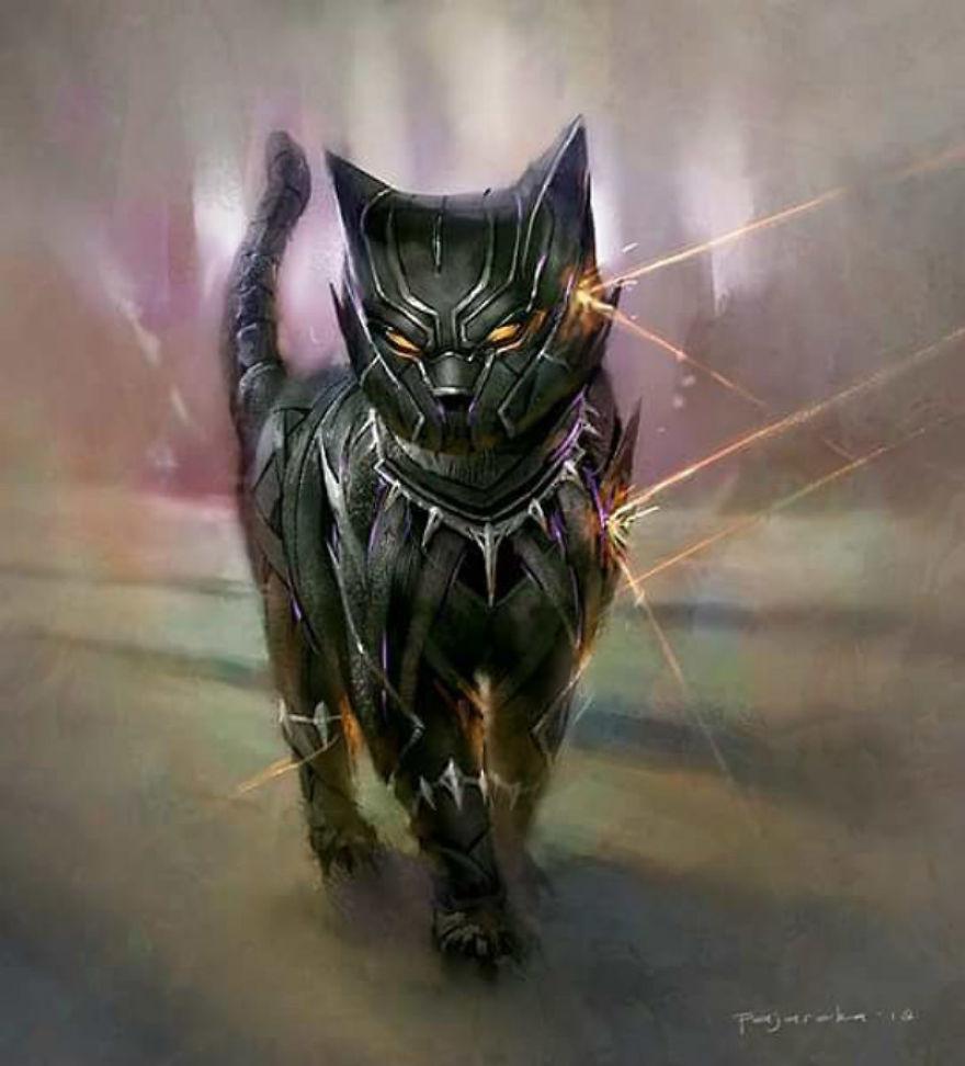black-kitteh