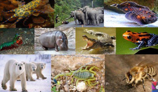 dünyanın-en-tehlikeli-hayvanları
