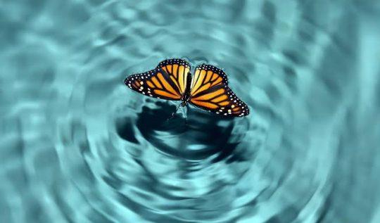 kelebek-etkisi