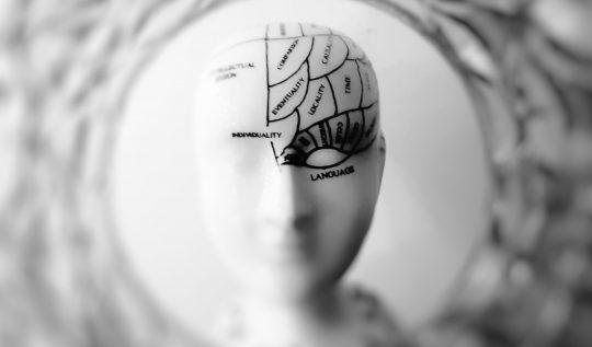 beynin-yapisi-