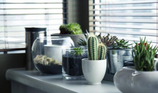 peyzaj-dunyasinin-populer-bitkisi:-kaktus