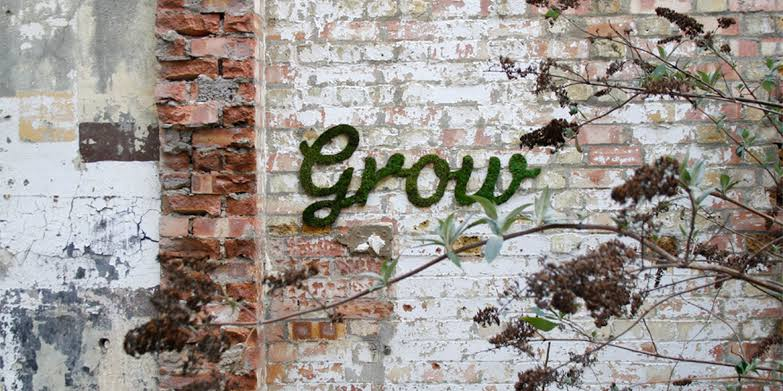 bitki-sanati-nedir?-moss-graffiti-ve-teraryum