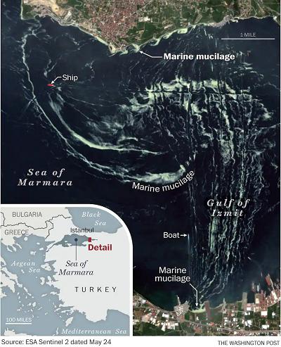 turkiye-ve-dunya-gundeminde-deniz-salyasi