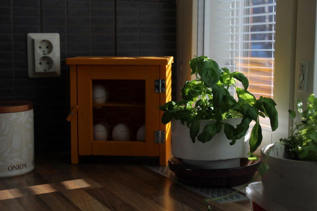 bulundugu-ortamda-havayi-temizleyen-bitkiler